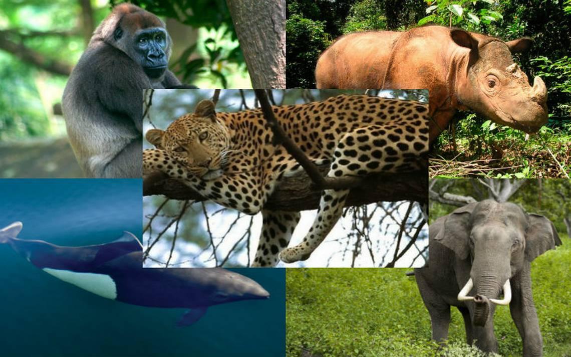 En peligro de extinción más de un millón de especies, debido al hombre
