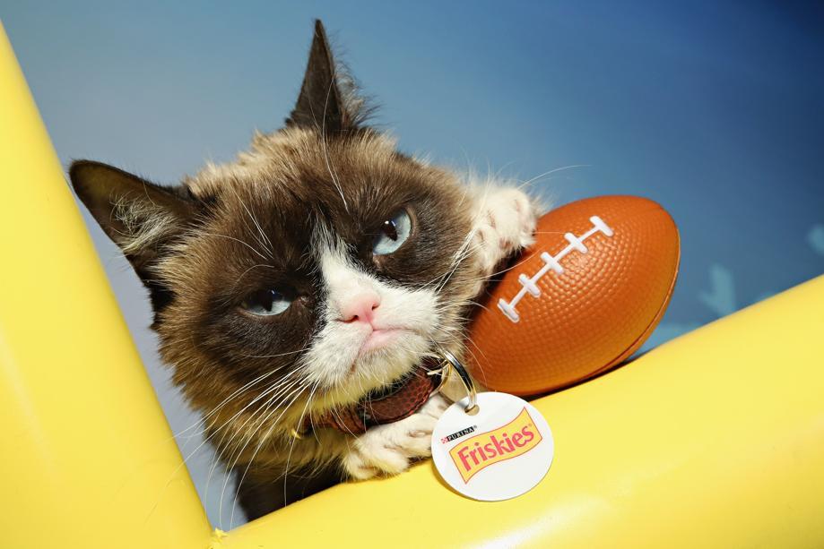 Muere la famosa Grumpy Cat, la