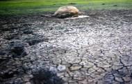 El calentamiento global degrada el suelo de México