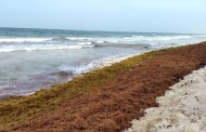 Invertirán 193 mdp para combatir el sargazo, en Quintana Roo