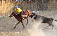 Los torneos de lazo no son una tradición en Yucatán, afirma diputado del PVEM