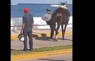 Charro patea a su caballo en pleno desfile  (VÍDEO)