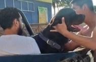 Un rottweiler le desfigura la cara a un niño, de tres años, en Progreso (VÍDEO)