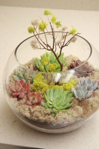 succulent-centerpieces-for-your-recepton-table-4