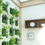 土を使わずに軽く壁にかけられる観葉植物フレームのインテリア