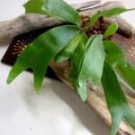 コウモリランは美しい観葉植物。寄せ植え、苔玉、吊るしたりと自由な発想で育てよう。