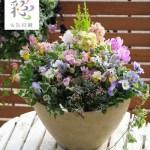お花好きならきっと喜ばれる!花束みたいな寄せ植えの贈り物。