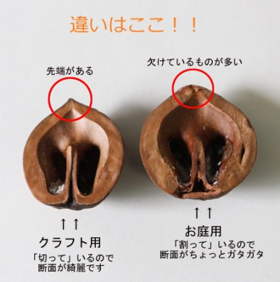 kurumi-kurafuto