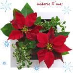 【クリスマス限定】土を使わずに育てる壁掛けポインセチア