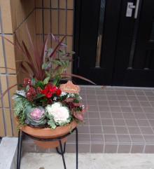 ミツバハマゴウの寄せ植え・玄関前