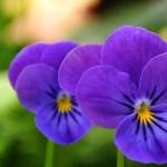 一年草の育て方は?春と秋のタネまき方法・保存・植え方のコツ