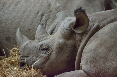 Chester Zoo 2015-022