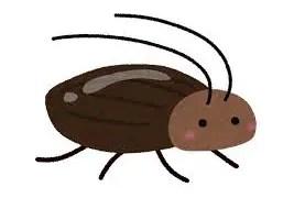 ゴキブリの解剖とかやってみた!!!!!