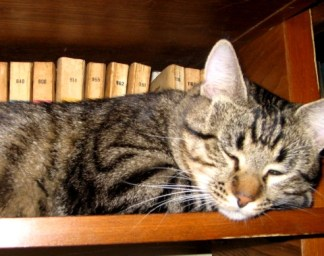 carti vechi-pisica noua