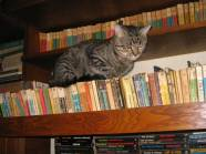 cărţile mele