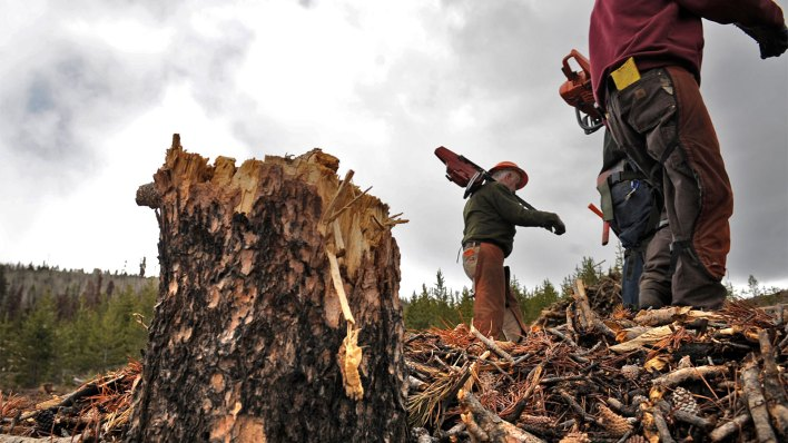 forest management - As wildfires worsen, more California farms are deemed too risky to insure