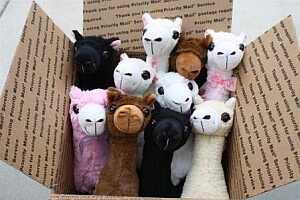 Box of Paca buddies