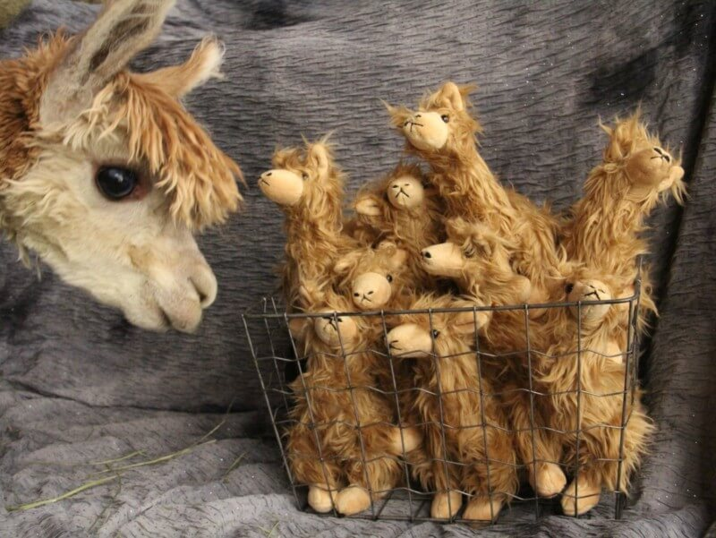 Small stuffed cody alpaca in a basket