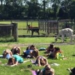 Alpaca Yoga at Grist Mill Farm
