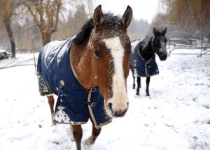 Horses Wellness BC