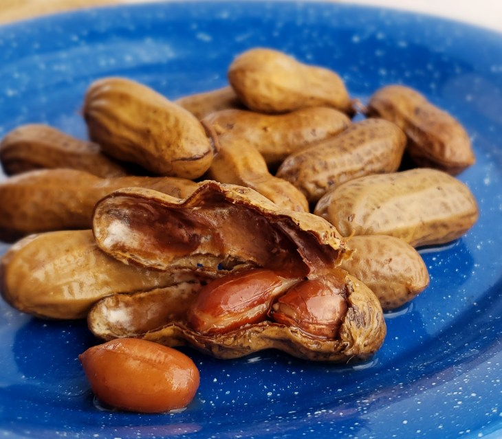 Boiled peanuts cracked open on a blue tin plate