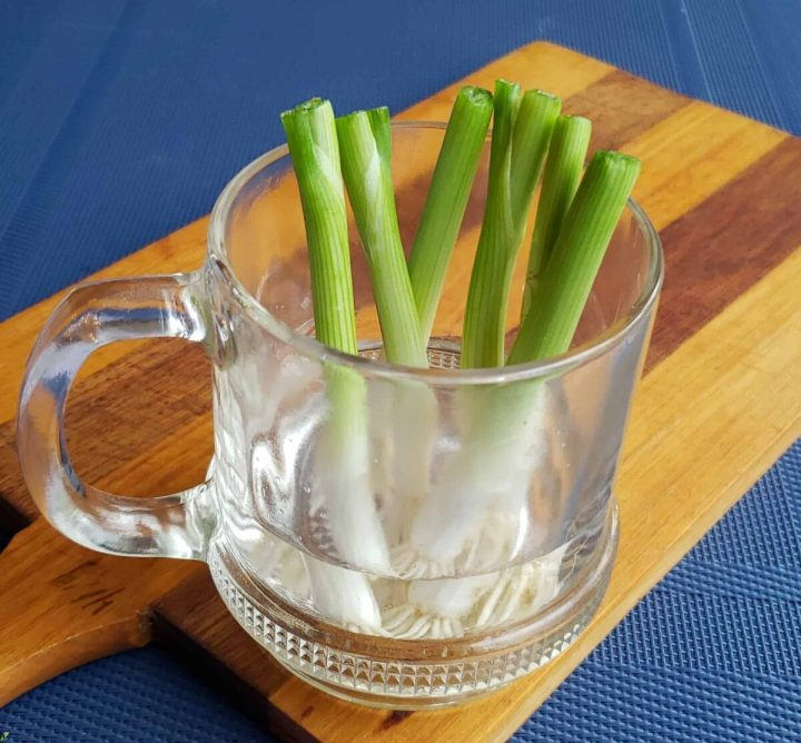 white parts of green onions with roots in glass coffee cup on wooden cutting board with blue surface