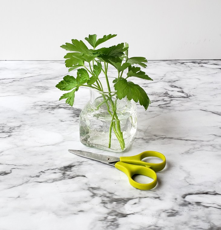 Place cut fresh herbs like parsley in a jar of water, cover loosely with a plastic bag but do not seal. This is called the green house method for pretreating fresh herbs
