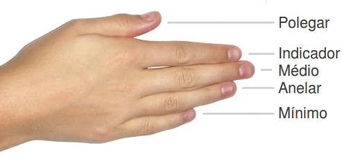 nome dos dedos da mao