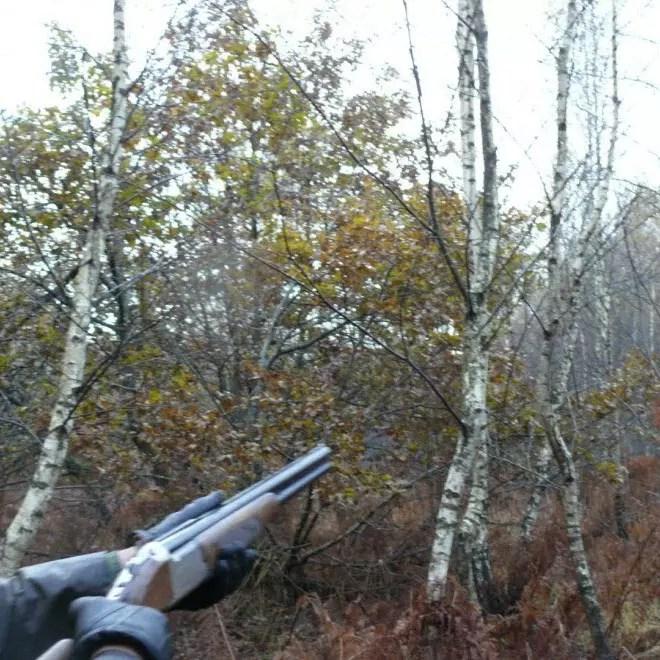 Mode de chasse grive cul levé