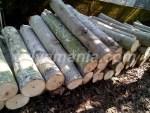 Alasan Masyarakat Jepang Menyukai menggunakan Material Kayu untuk Membangun Hunian
