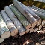 Harga Jual Kayu Sengon di Batang – Jawa Tengah