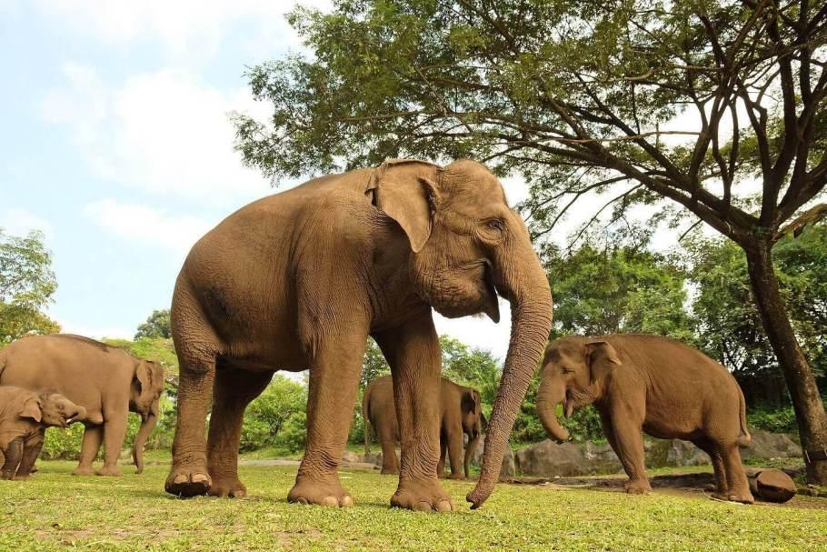 bali-safari-marine-park6