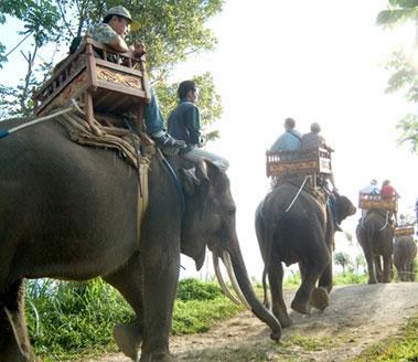 elephant-riding5