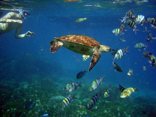 snorkel-with-turtle