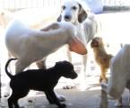 Sancionada lei que cria Conselho Municipal e Fundo de Proteção e Bem-Estar Animal em Pará de Minas