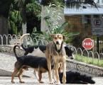 Dia D de Vacinação Antirrábica é neste sábado em mais de 25 pontos de Pará de Minas