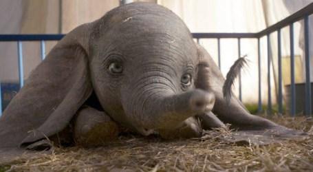 Cine News: Dumbo