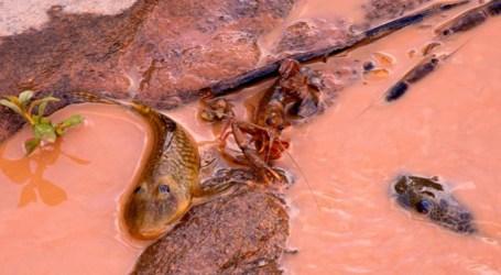 Nota técnica da Anvisa sobre consumo de peixes do Rio Doce gera divergência