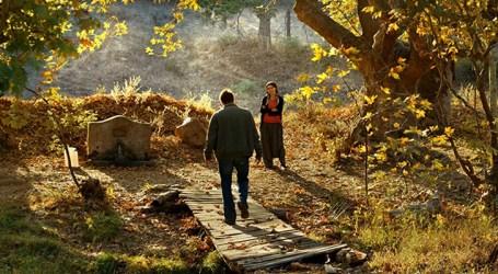 Cine News: A Árvore dos Frutos Selvagens