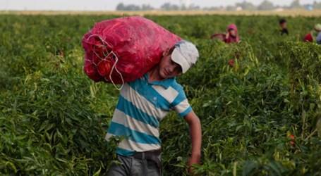 Mundo está longe de cumprir metas relacionadas a alimentos e agricultura