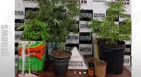 Casal é preso em residência de Divinópolis com oito pés de maconha e cocaína
