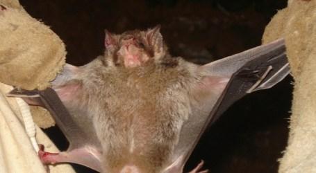 IMA combate raiva animal em todas as regiões de Minas Gerais