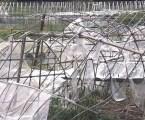 Tufão Faxai causa muitos prejuízos à agricultura do Japão