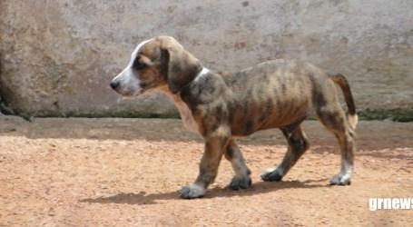 CCZ realiza castração de animais e vereador incentiva campanha para adoção de cães