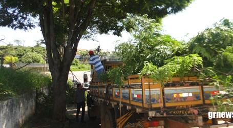 Meio Ambiente poda árvores em várias regiões de Pará de Minas visando melhorar iluminação das ruas