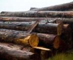 Operação conjunta combate desmatamento ilegal no Amazonas