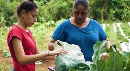 Programa incentiva cooperativismo da agricultura e agroindústria familiar em MG