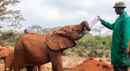 Crimes contra vida selvagem ameaçam saúde humana, alerta agência da ONU