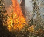 Bombeiros continuam combatendo incêndio florestal na Serra dos Órgãos