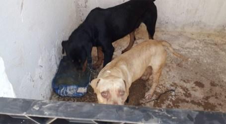 Menina atacada por cães em Pará de Minas passa por cirurgia em BH e quadro clínico ainda é muito grave